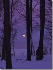 purple night forest moon
